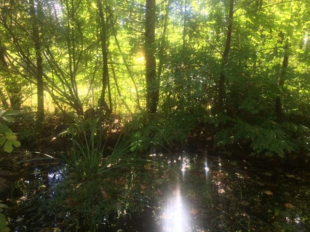 Susan's pond green